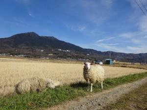 羊と筑波山