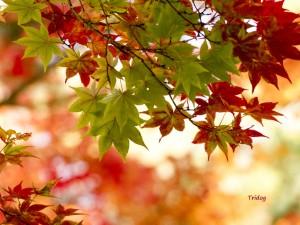 色彩り紅葉