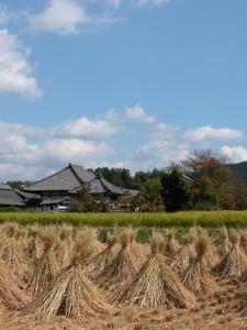 収穫:飛鳥寺秋色