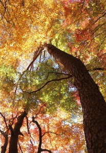 秋色の中へ