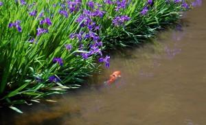 長岳寺放生池