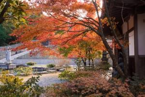呑山観音寺の紅葉♪