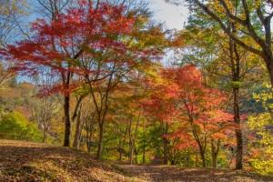 秋景色を求めて (3)