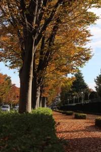 秋色を装う歩道
