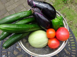 家庭菜園本日の収穫