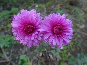 花びら二つ