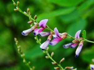 昭和公園の花②