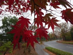 晩秋の雨 ②