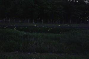 蛍 (2)