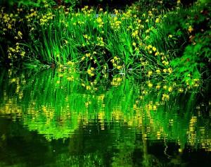 日比谷公園鶴の噴水池にて