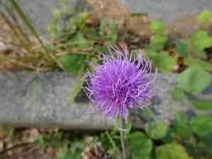ひっそりと咲く花