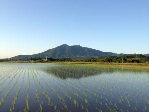田植えの後の筑波山