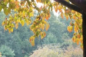 智光山公園 秋色深し♪~